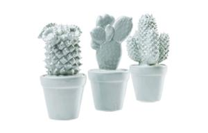 Декорация Cactus Light Blue Assorted