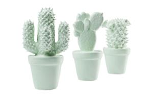 Декорация Cactus Mint Assorted