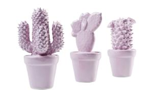 Декорация Cactus Rose Assorted